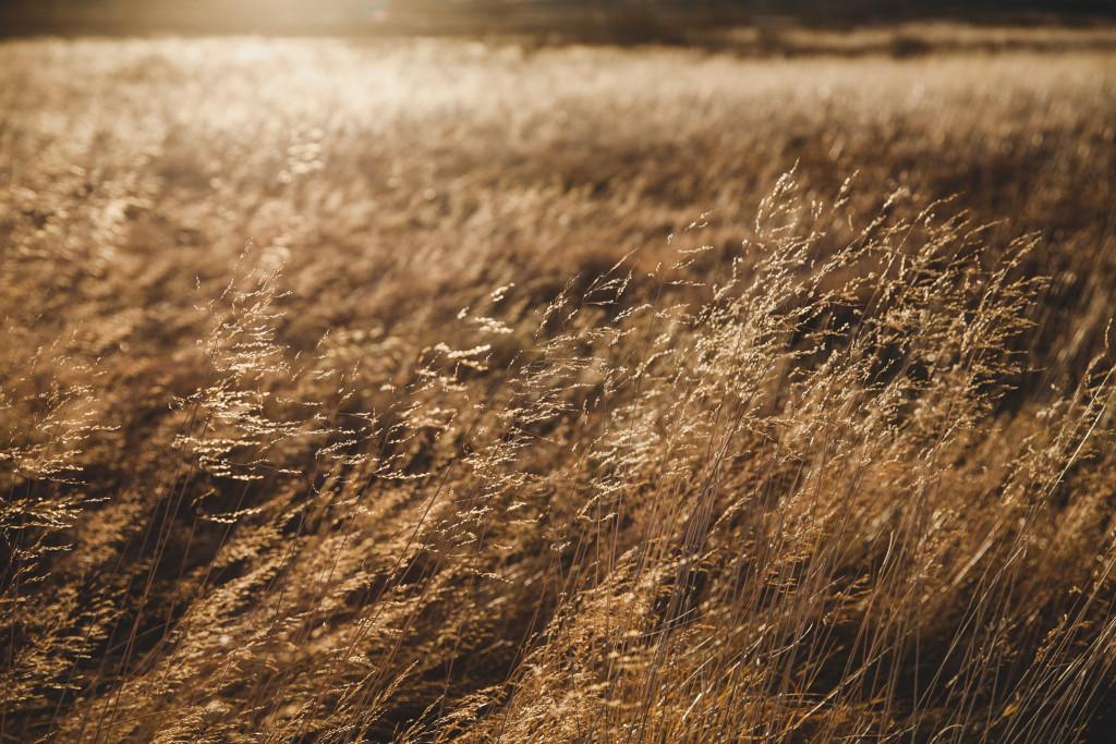 heaths-heideveld